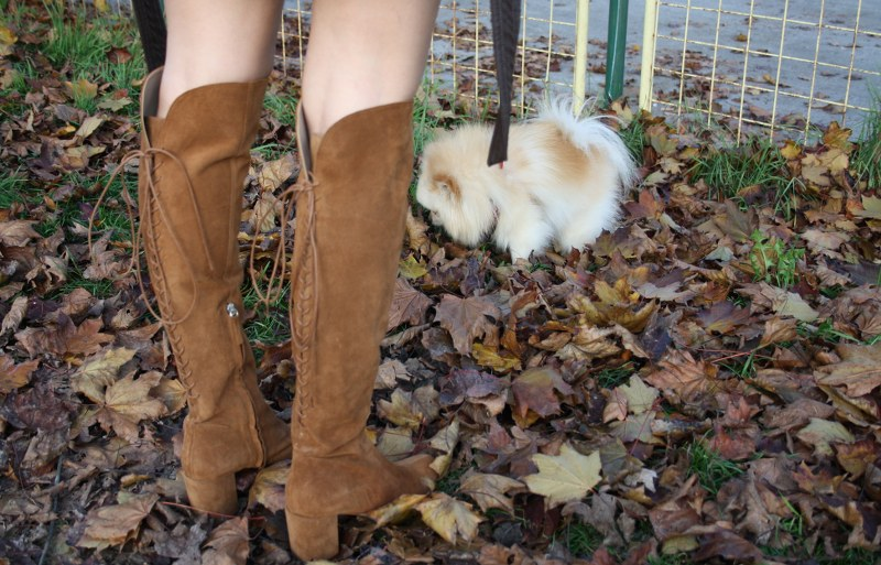 knee-high boots, pomeranian dog, zara